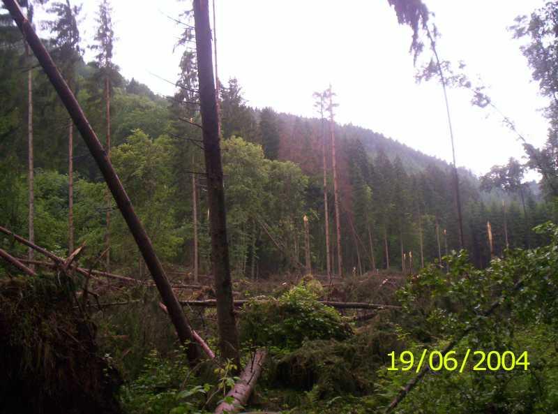 http://www.wetter-express.de/Artikel/ana10-06-04-schneisse01.jpg (48645 Byte)